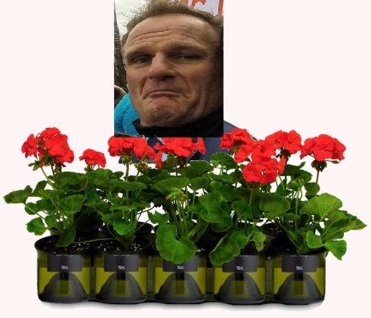 achter-de-geraniums